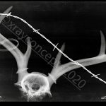 5×7 antlers cr