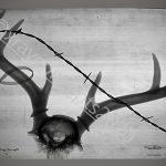 5×7 antlers pos border cr